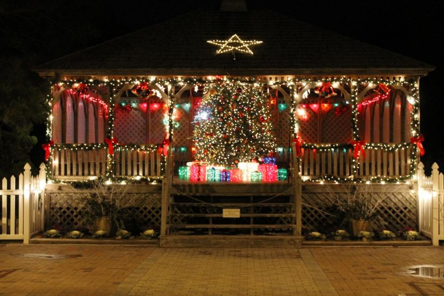 tree-at-light-house