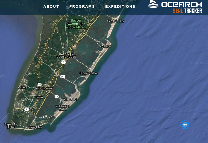 Tuesday Morning a Great White Shark was Detected Off Cape May Coast